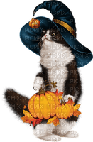 halloween witch cat-- sorcière chat