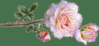 ruusu, rose, kukka, fleur