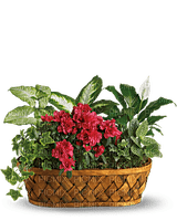 Kaz_Creations  Flowers Plant Basket