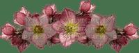 kukka fleur flower