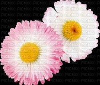 image encre color edited fleurs by me