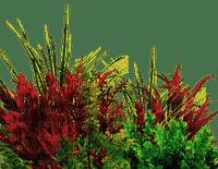 Plants.Fleurs.Grass.Victoriabea