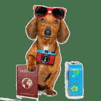 dog vacation chien vacances