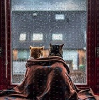 cat chat katzen room zimmer window fenetre rain regen house paysage animal image remuer  fond  background  chambre