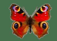 papillon- butterfly