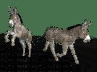 donkey, aasi, sisustus, decor
