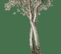 autumn tree sepia kikkapink