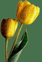 yellow tulips jaune tulipe 🌷🌷