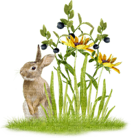 easter ostern Pâques paques deco tube jardin flower fleur garden bunny hase lapin animal grass