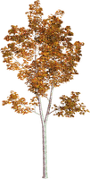 automne_autumn__leaves_tree_ arbre_BlueDREAM70