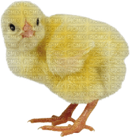 Kaz_Creations Easter Deco Chick