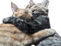 cats hugs chats câlins 😺>:D<