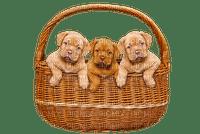 dog chien hund