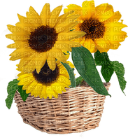 fleur_flower-fleurs_flower basket Sunflower_tube-decoration_flower_tournesol-image-yellow-jaune_Blue DREAM 70