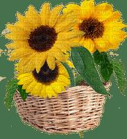 fleur_flower-fleurs_flower basket Sunflower_tube-decoration_flower_tournesol-image-yellow-jaune_Blue DREAM 70