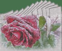 winter hiver fleur flower rose frozen snow neige fond background