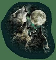 wolf  moon loup  lune