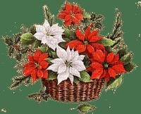 christmas noel red white  flowers