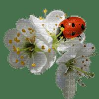 spring printemps frühling primavera весна wiosna  blossom blume blüten ladybug insect garden jardin deco tube flower fleur marienkäfer coccinelle