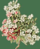 påsk-blommor