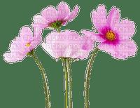 Fleurs.Flowers.Victoriabea