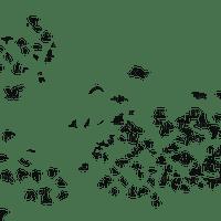 chantalmi vol d'oiseau birds noir black
