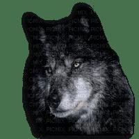 loups web
