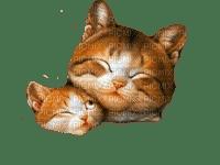 Katze chat cat