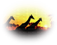 africa landscape afrique paysage