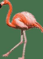 Kaz_Creations Bird Flamingo