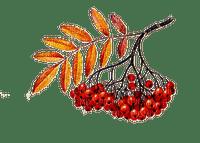 automne plante  branche_autumn_ the plant  branch