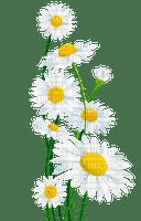 daisy flowers deco Marguerite  fleur