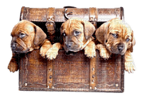 chien-dog-box-malle-coffre