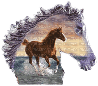 aze cheval