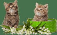 Kaz_Creations Cats Cat Kittens Kitten
