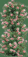 fle fleur rose