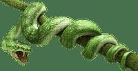snake green serpent vert