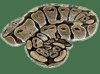 snake, käärme