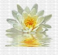 chantalmi fleur blanche nénuphar