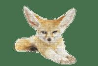 renard des sable