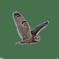 owl bp