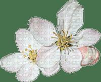 Fleur blanche.Flower.Victoriabea