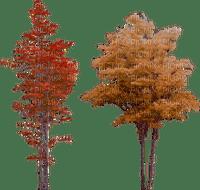 aurumn trees, sunshine3