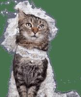 wedding cat bride chat mariage la mariée