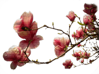 branche fleurie rose