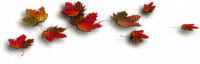 autumn leaVES BORDER AUTOMNE FEUILLES  BORDURE