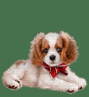 Petit chien NOËL