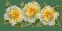 ruusut, roses, ruusu, rose, kukka, fleur, flower