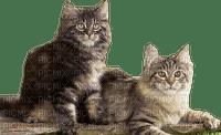 Chat, cat, Katze