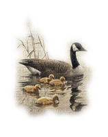 Kaz_Creations Animals Animal Birds Bird Duck Paysage Scenery